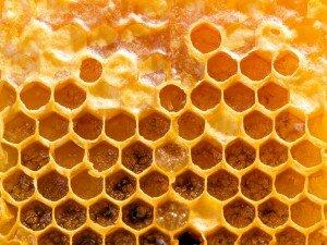 Мед и прополис при пародонтозе