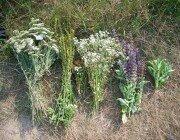 Травы для полосканий